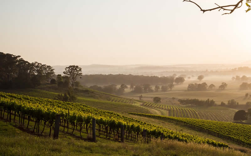 Hunter Valley New South Wales Tourism