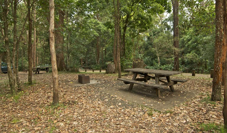 Sheepstation Creek campground - New South Wales Tourism