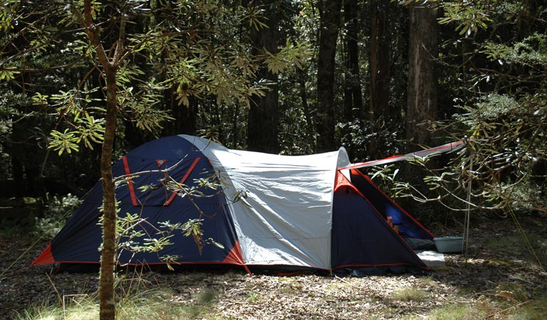 Thungutti campground - New South Wales Tourism