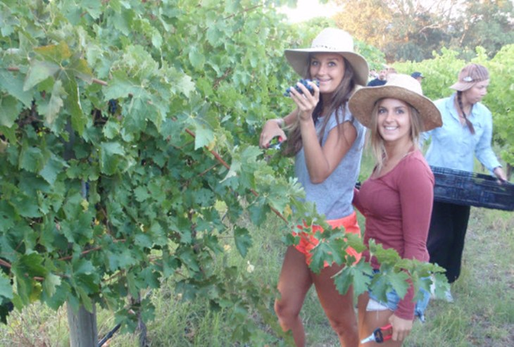 McLaren Vale Backpackers - New South Wales Tourism