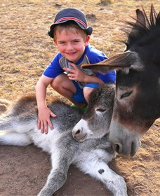 Destiny Boonah ECO Cottages and Donkey Farm - New South Wales Tourism
