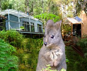 Huon Bush Retreats - New South Wales Tourism