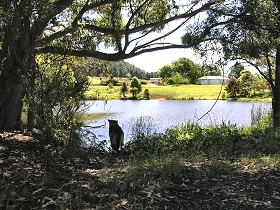 Newry Park Cottage - New South Wales Tourism