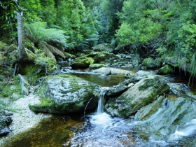 Tarkine Wilderness Experience at Corinna - New South Wales Tourism