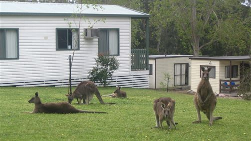 Halls Gap Caravan Park - New South Wales Tourism