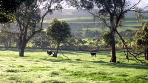 Bellevue Farmstay - New South Wales Tourism