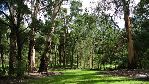 Wildwood Retreat - New South Wales Tourism