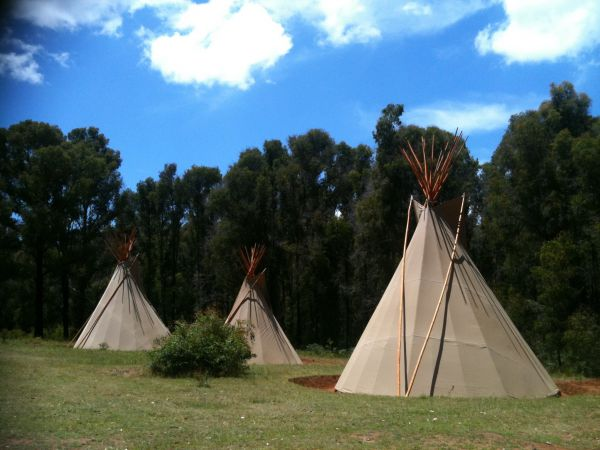 Kinglake Forest Adventures Camp - New South Wales Tourism