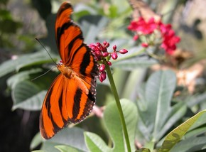 Butterfly Farm - New South Wales Tourism
