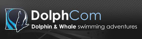 Dolphcom - Dolphin  Whale Swimming Adventures - New South Wales Tourism