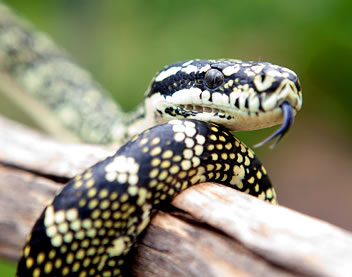 Reptile Encounters - New South Wales Tourism