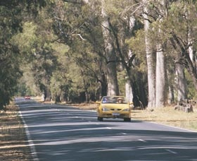 Ludlow Tuart Forest - New South Wales Tourism