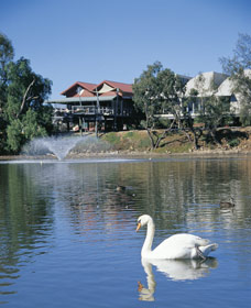 White Swans - New South Wales Tourism