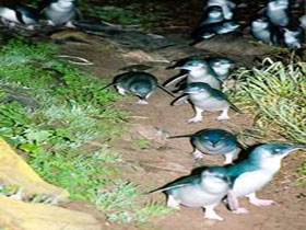 Penneshaw Penguin Centre - New South Wales Tourism