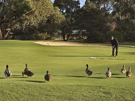 Royal Hobart Golf Club - New South Wales Tourism