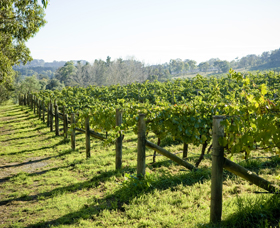 Surveyor's Hill Vineyards - New South Wales Tourism