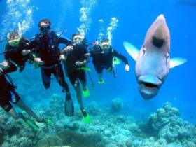Magic Mountain Dive Site - New South Wales Tourism