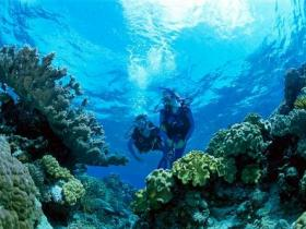 Coral Gardens Dive Site - New South Wales Tourism