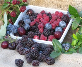 Bright Berry Farms - New South Wales Tourism