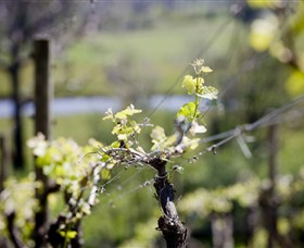 Norton Estate Wines - New South Wales Tourism