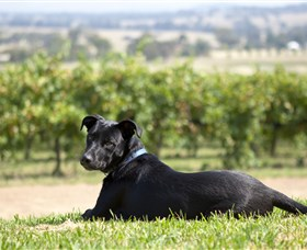 Moothi Estate Vineyard and Cellar Door - New South Wales Tourism