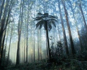 Yarra Ranges National Park - New South Wales Tourism