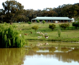 Clearview Alpacas - New South Wales Tourism