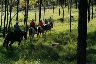 Hunter Valley Horse Riding and Adventures - New South Wales Tourism