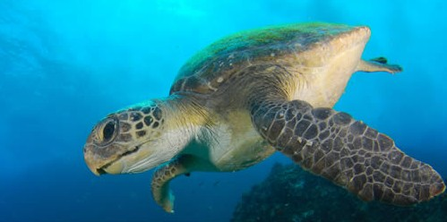 Byron Bay Dive Centre - New South Wales Tourism