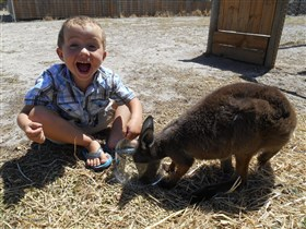 Animal Farm Goolwa - New South Wales Tourism