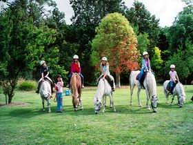 Limestone Coast Horseriding - New South Wales Tourism