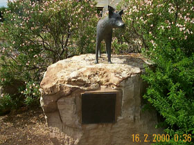 Dingo Statue - New South Wales Tourism
