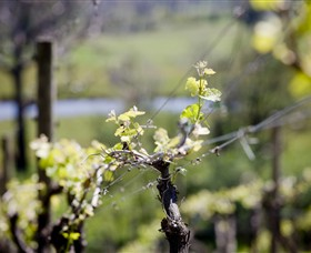 Mountainside Wines - New South Wales Tourism