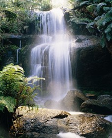 Mount Buangor State Park - New South Wales Tourism