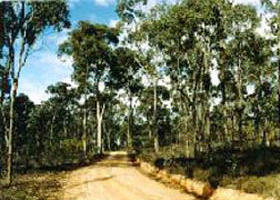 Paddys Ranges State Park - New South Wales Tourism