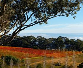 Bloodwood Estate - New South Wales Tourism