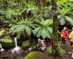 Baw Baw National Park - New South Wales Tourism