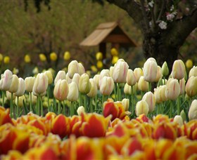 Tulip Top Gardens - New South Wales Tourism