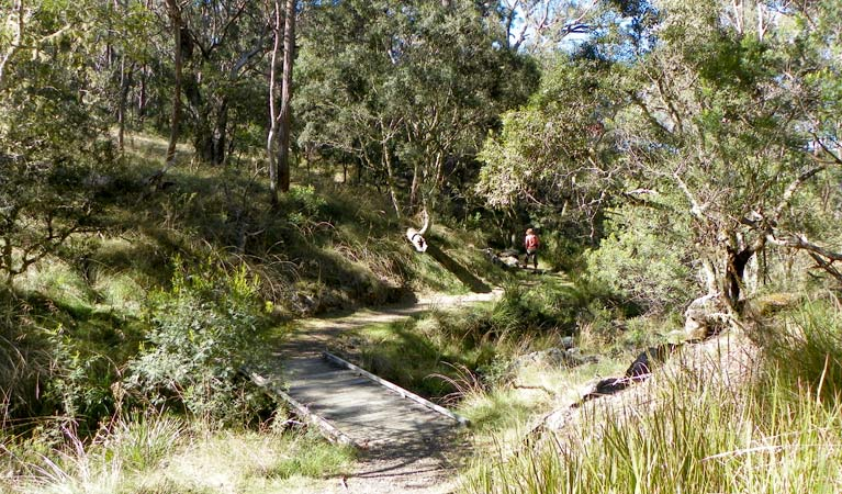 Wollomombi walking track - New South Wales Tourism