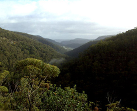 Nattai Gorge Lookout - New South Wales Tourism