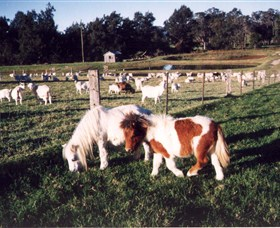 Trudgalong Farm - New South Wales Tourism