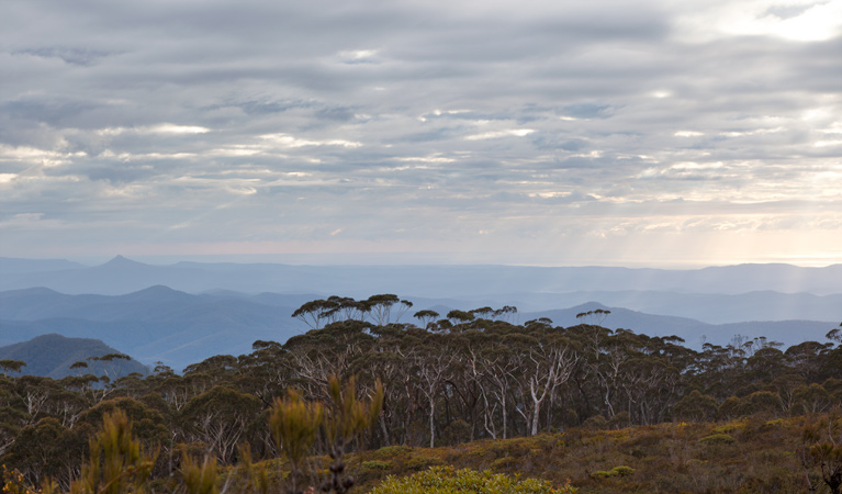 Mount Budawang trail - New South Wales Tourism