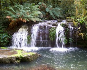 Barrington Tops National Park Walks - New South Wales Tourism