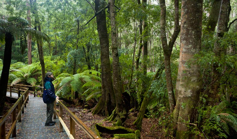 Monga National Park - New South Wales Tourism