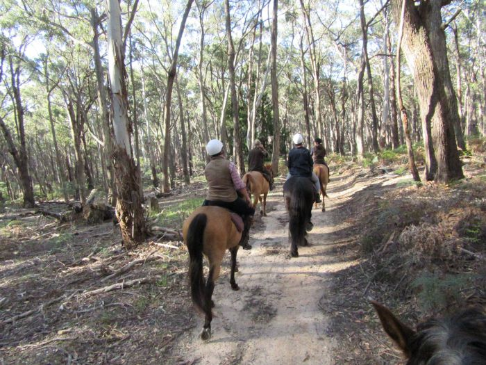 Silver Brumby Trails - New South Wales Tourism