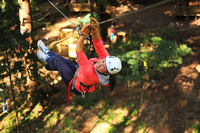 Trees Adventure Lane Poole Park - Treetop  Zipline Experience - New South Wales Tourism