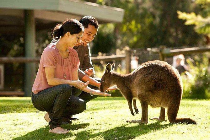 Very Best of Perth Tour - Wildlife Park  City Highlights Tour - New South Wales Tourism