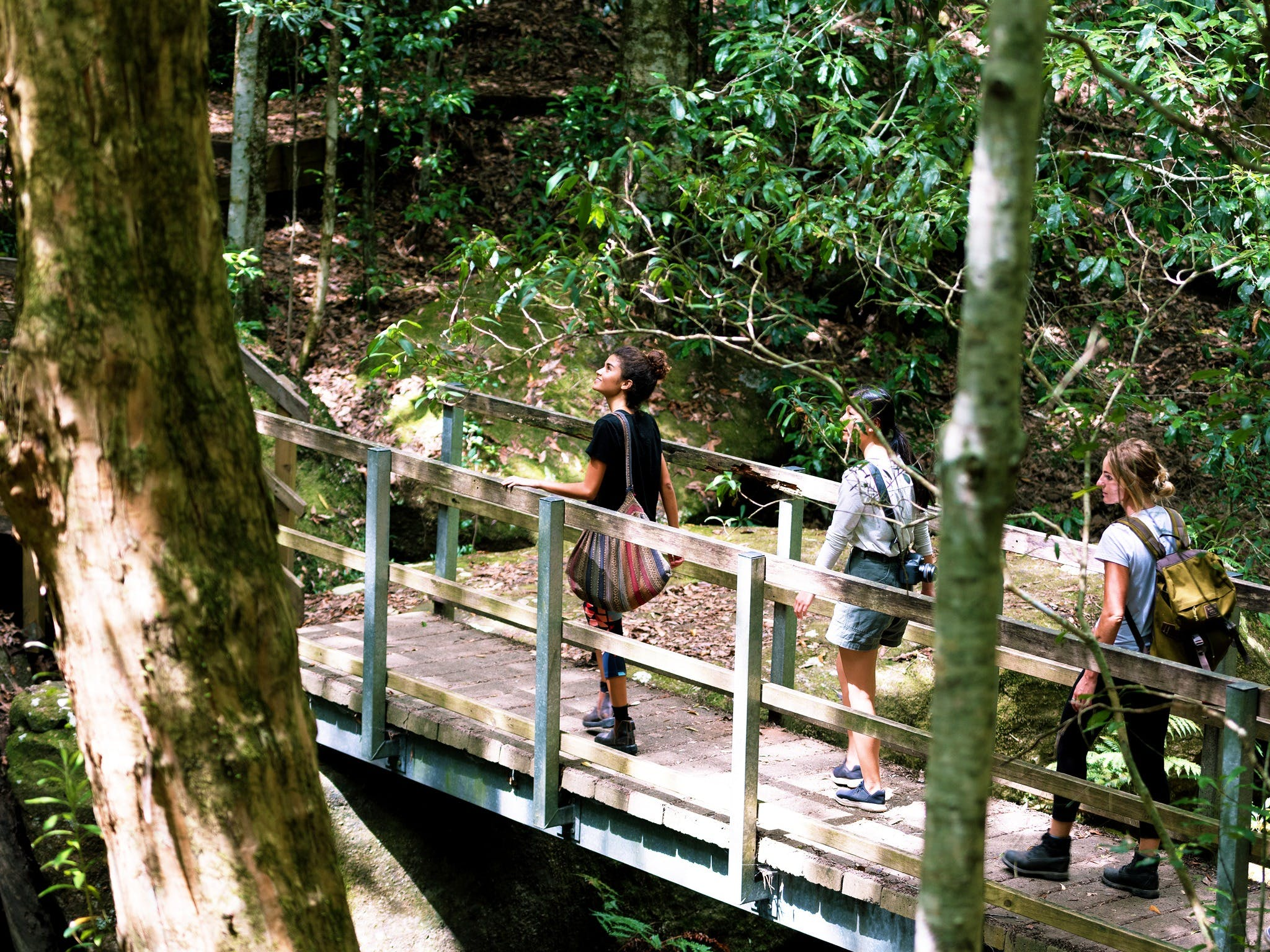 Watagans National Park - New South Wales Tourism