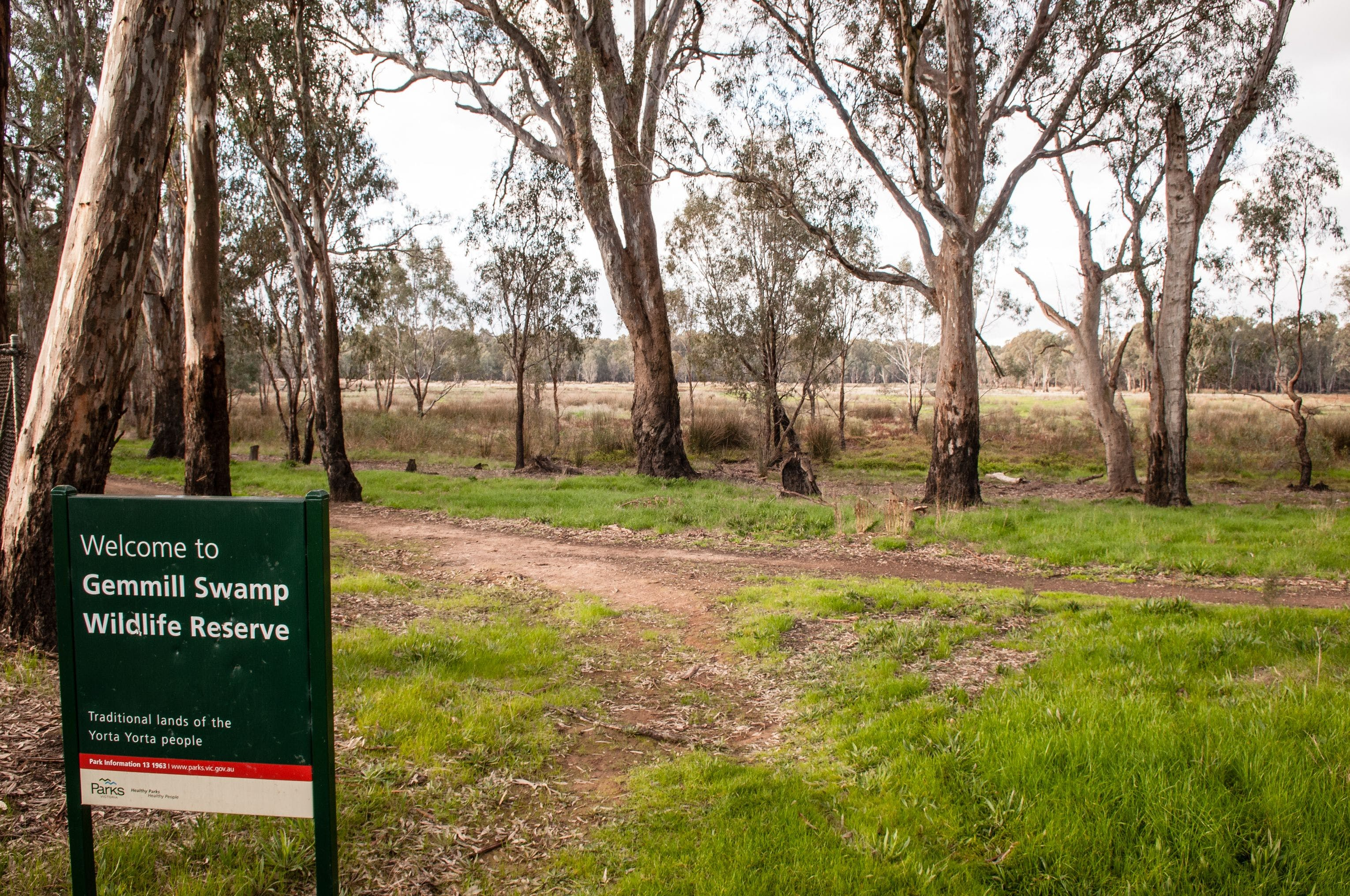 Gemmill Swamp Wildlife Reserve - New South Wales Tourism