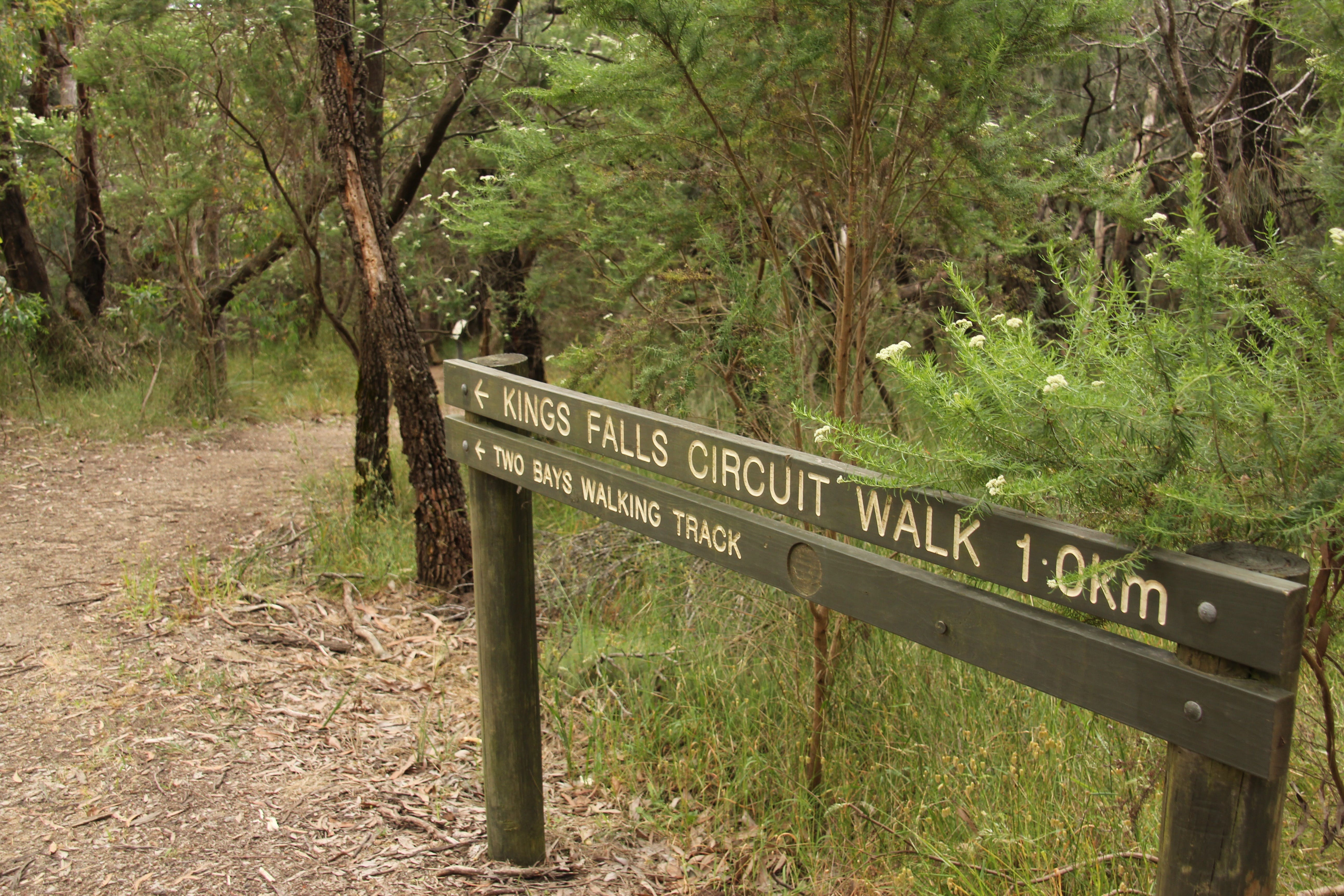 Waterfall Gully - Kings Falls Circuit Walk - New South Wales Tourism